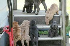 So many wrinkles!
