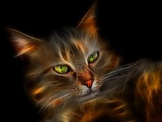 Top 10 Most Beautiful Cat Breeds In The World Wallpaper Doodle, Wallpaper Keren, Wallpaper Uk, Doodle Keren, Black And White Girl, Gifs, Most Beautiful Cat Breeds, Art Blog, Cute Cats