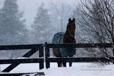 """Can I come in now?"" The #horses don't always like the #weather and would rather be in the #barn. www.shadyridgephotography.com"