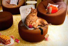 Garfield Is Still Hungry (montaje para concurso).
