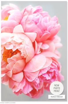 find beautiful peonies in EZ's shop: http://society6.com/CreatureComforts