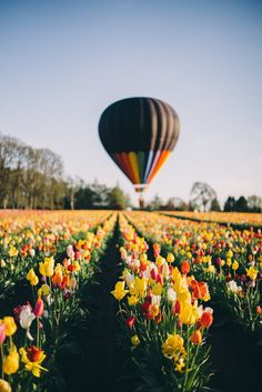 Gal Meets Glam - 2016 April 21 - Thomas Takeover: Quick Trip to Oregon - Wooden Shoe Tulip Festival Oh The Places You'll Go, Places To Travel, Places To Visit, Travel Destinations, Oregon Travel, Travel Usa, Travel Portland, Beach Travel, Beautiful World