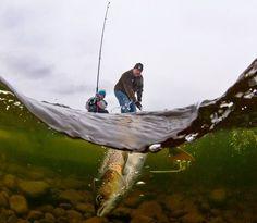 Tidlig krøkes: Med dette bildet vant Audun Rikardsen prisen for årets turbilde. Bildet er tatt med undervannskamera i Altaelva og viser far og sønn som iherdig fanger en laks.
