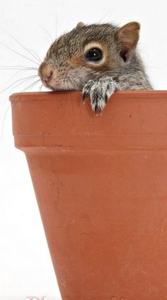 How to plant a squirrel... (this pin is for Ellie)