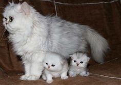 oohhhhh my Godddd!!! I want one!!!!!