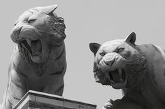 Tiger Grotesque Comerica Park Detroit, MI by RichKD  on Flickr                   7        Newer Older  Comerica Park Detroit, MI