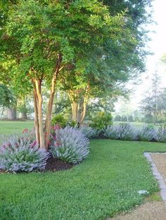 front yard landscape design Create a beautiful yard with these creative landscape ideas with big impact. Landscaping Along Fence, Home Landscaping, Landscaping Software, Natural Landscaping, Landscaping Design, Southern Landscaping, Crepe Myrtle Landscaping, Farmhouse Landscaping, Landscaping Company