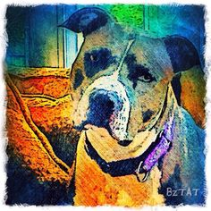 Custom Digital Pet Portrait of a dog named Liza. Order your pet's portrait at: www.bztatstudios.com. #custompetportrait #digital #digitalart #iphoneography #dogart #bztatart