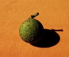 How to Harvest, Hull, and Store Black Walnuts