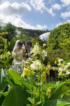 Alchemy Photography - Eden Project Wedding