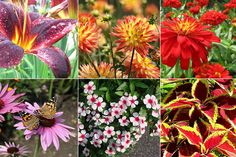 8 flores para plantar no jardim para o Verão
