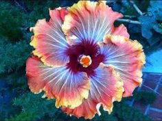 flores lindas azules - Buscar con Google