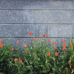 Marsha Valk   Artful Adventures Stroll Challenge: Growth - poppies Poppies, Challenges, Adventure, Instagram, Art, Art Background, Kunst, Poppy, Adventure Movies