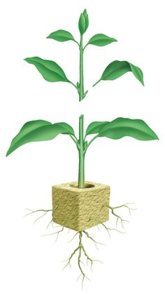 """""""Cutting Propagation for the Home Gardener"""" November 13, 2014 11:15 am. Durham Public Library, 7 Maple Ave, Durham, CT."""