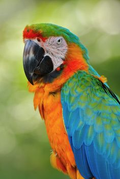 Beautiful Macaw in the Rainforest. My favorite color of macaw. Pretty Birds, Beautiful Birds, Animals Beautiful, Cute Animals, Exotic Birds, Colorful Birds, All Birds, Love Birds, Toucan