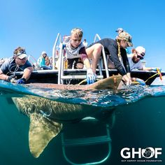 15 best ghof images foundation great white shark predator rh pinterest com