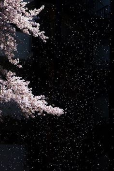 sakura hanami cherry blossom flowers pink/ blizzard of falling cherry blossoms at night, so romantic ❤︎ Sakura Cherry Blossom, Cherry Blossom Flowers, Flower Petals, Flower Wallpaper, Wallpaper Backgrounds, Iphone Wallpaper, Beautiful World, Beautiful Places, Foto Art