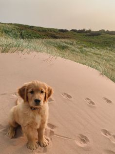 Super Cute Puppies, Cute Little Puppies, Cute Dogs And Puppies, Cute Little Animals, Baby Dogs, Cute Funny Animals, I Love Dogs, Doggies, Cute Animal Photos