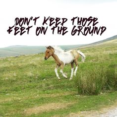 Fly baby.  Fly. ---- #horse #quote #quoteoftheday #inspiration #inspirationalquotes #pony #country #countryside #countryliving