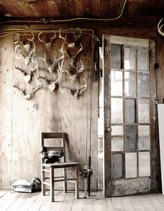 Collection of antlers for office