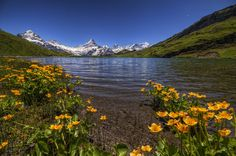 Bachalpsee above Grindelwald - Switzerland Switzerland Places To Visit, Art Photography, Poster, Mood, Mountains, Austria, Travel, Beautiful, Nature