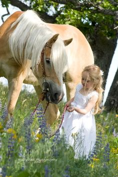 Haflinger + blonde girl + Lupine =   BEAUTIFUL