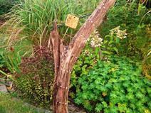 """Garten Skulptur """"Tattoo"""" Treibholz handgefertigt"""