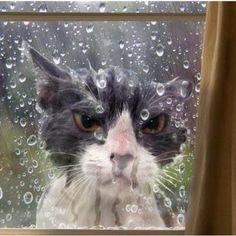I'm thinkin' he wants in.