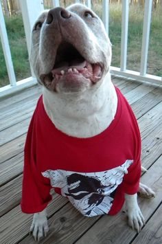 Dexter wearing one of his T-shirts!!!