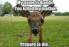 39 new Ideas for funny animals pictures hilarious dump a day Animal Captions, Funny Animal Memes, Funny Animal Pictures, Funny Animals, Cute Animals, Funny Memes, Hilarious, Animal Pics, Animal Humor