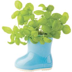Baby Boot Planter, Blue by Moolka.com