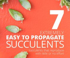 7 Extremely Easy to Propagate Succulents via @succsandsun
