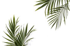 ShayCochrane_Styled Stock Photography_Palm Leaves-3.jpg (3500×2333)