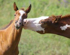 Follow me if you like horses