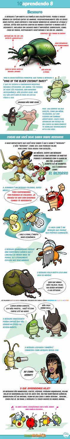 10aprendendo com o Coala #8 - Besouro