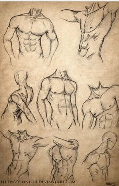 #Anatomia | Male body sketches