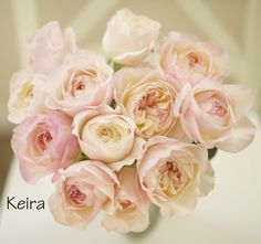 David Austin Keira Garden Rose, a lovely pale pink garden rose