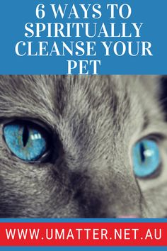 6 Ways To Spiritually Cleanse Your Pet Animal Reiki, Spiritual Animal, Healing Light, Sound Healing, What You Can Do, How To Find Out, All Archangels, Love Sound, Solfeggio Frequencies