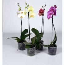 Картинки по запросу перлит для растений купить