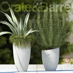 3D Plants 65 Model - 3D Model