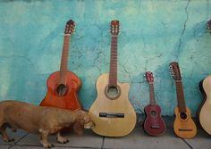 Perro salchicha #duchshund #guitarra #charango #ukelele