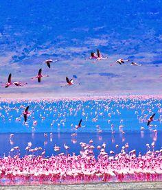 Lake Nakuru,Kenya: - PixoHub