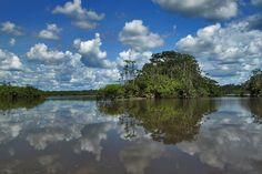 One of Four Lagoons in Cuyabeno National Park in the Ecuadorian Amazon