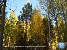 Pretty #fall views along the Veit Springs loop in #Flagstaff Arizona