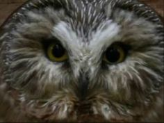 owls slide show - YouTube