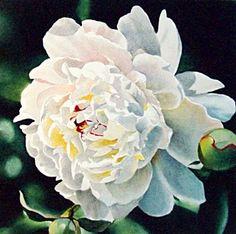 White Peony, original painting by artist Jacqueline Gnott   DailyPainters.com