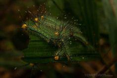 A beleza e os perigos da selva