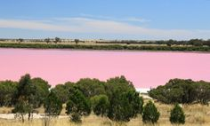 Lake Retba (Lac Rose) is pink. Located just north of Dakar, Senegal, the pink hue is due to Dunaliella salina, a micro-algae common to salt fields like this. Remarkable.
