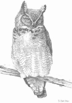 Owl Drawing - Picture 1 in 2D media: Dennis Dalton -