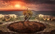 Morze, Fale, Drzewo, Zachód słońca